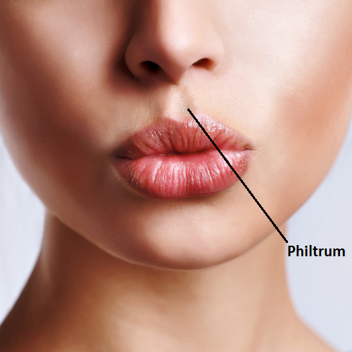 Image result for philtrum
