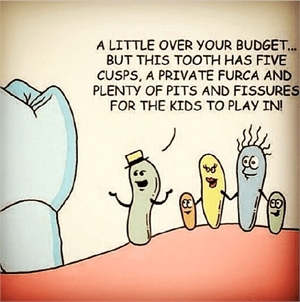 This tooth has five cusps, a private furca and plenty of pits and fissures for the kids to play in.
