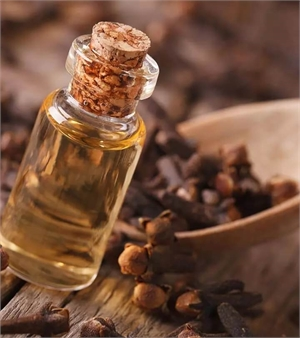 Clove oil can relief minor toothaches