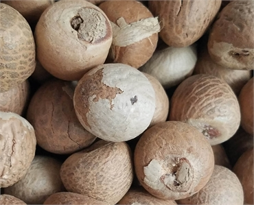 How Betel Nut chewing affects your teeth and gums