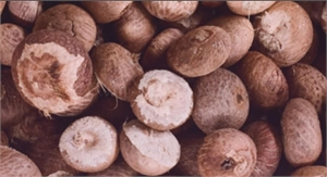 Betel nuts chewing can have irreversible effects on teeth and gums