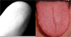 The tongue print, like the fingerprints, can be used for identifying individuals. Every tongue has a unique structure that can be recorded and compared.