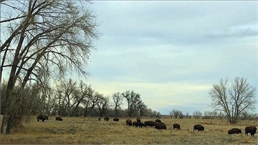 Rocky Mountain Arsenal National Wildlife Refuge at 7.4 miles to the north of Comfort Dental Kids - A